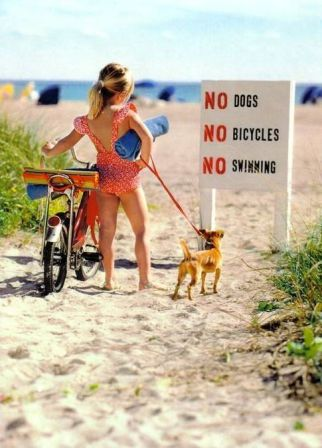 no_dogs_no_swimming.jpg